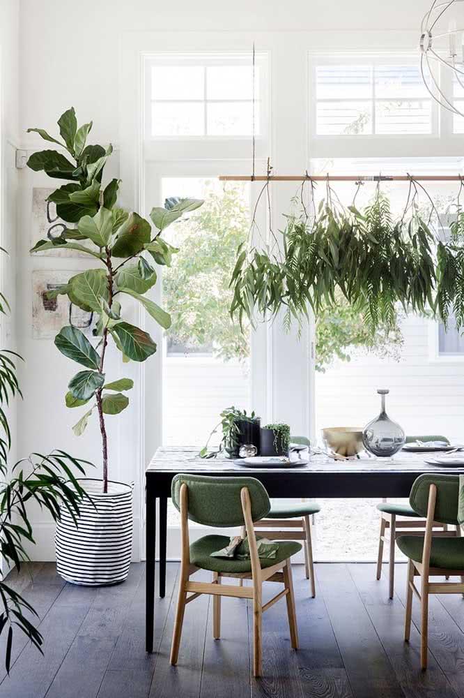 Ficus Lyrata na sala de jantar