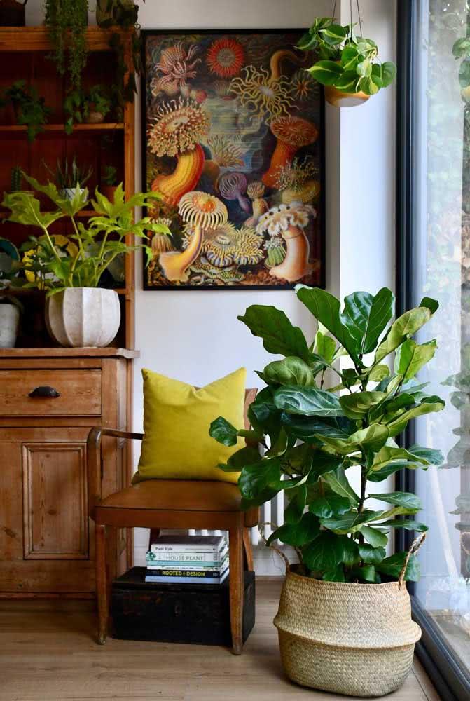 Nada como um cachepô de palha para realçar a beleza da Ficus
