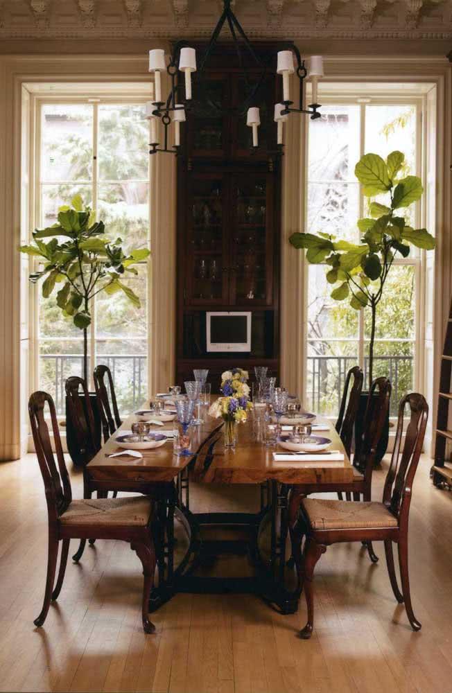 A sala de jantar clássica ficou incrível com o par de Ficus rente a janela