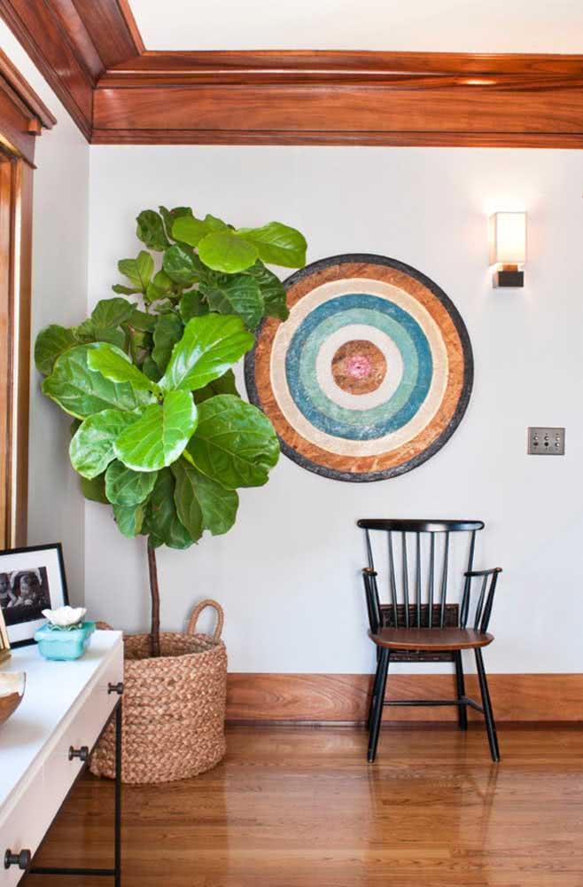 A parede branca destaca o verde intenso das folhas da Ficus