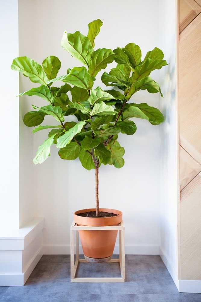 Vaso de cerâmica para inspirar uma decoração rústica com a Ficus Lyrata