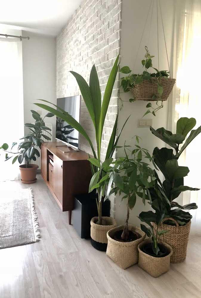 Urban jungle na sala com diferentes espécies, entre elas a Ficus
