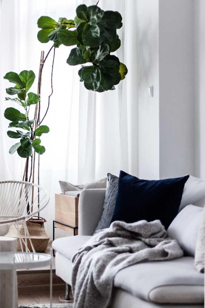 Ficus Lyrata e sala escandinava: uma combinação que sempre funciona