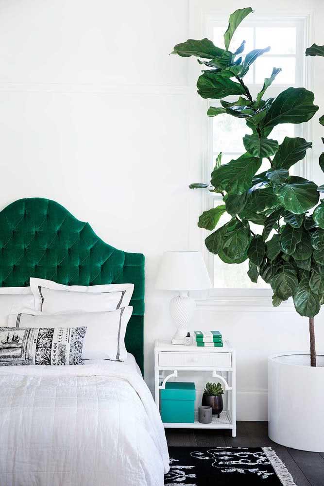 Verde na cabeceira e nas folhas da Ficus