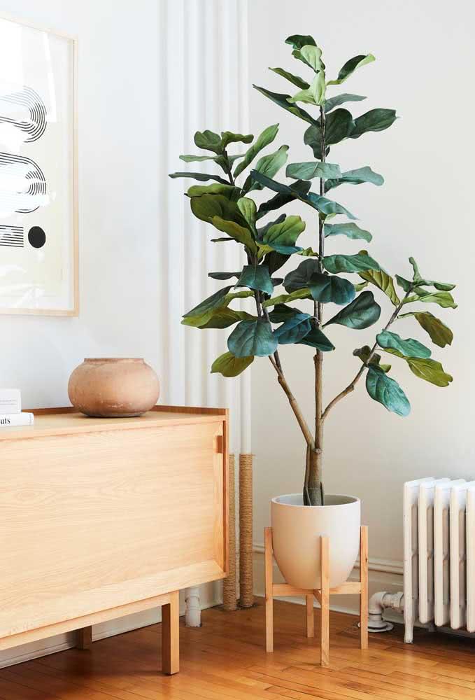 Suporte de madeira para evidenciar ainda mais a Ficus na decoração