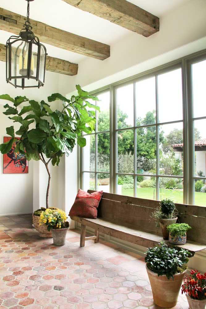 Ambientes rústicos também ficam perfeitos com a Ficus Lyrata