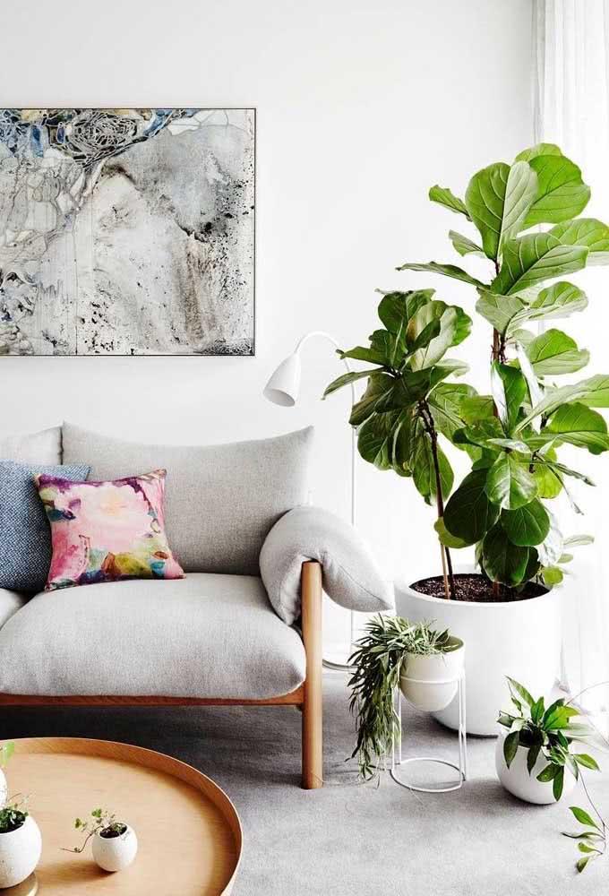 Ficus Lyrata em uma versão minimalista e elegante dentro do vaso branco