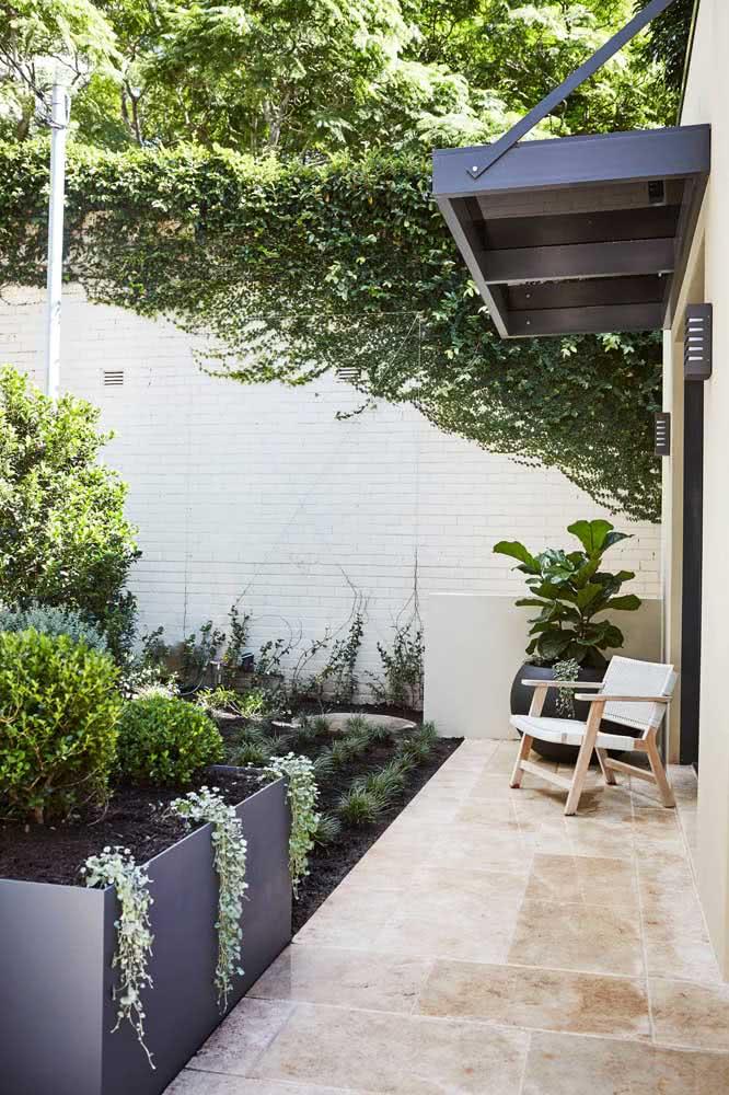 Ficus Lyrata na varanda bem protegida do sol