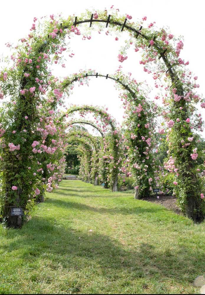 Um caminho de flores perfumadas para você passar