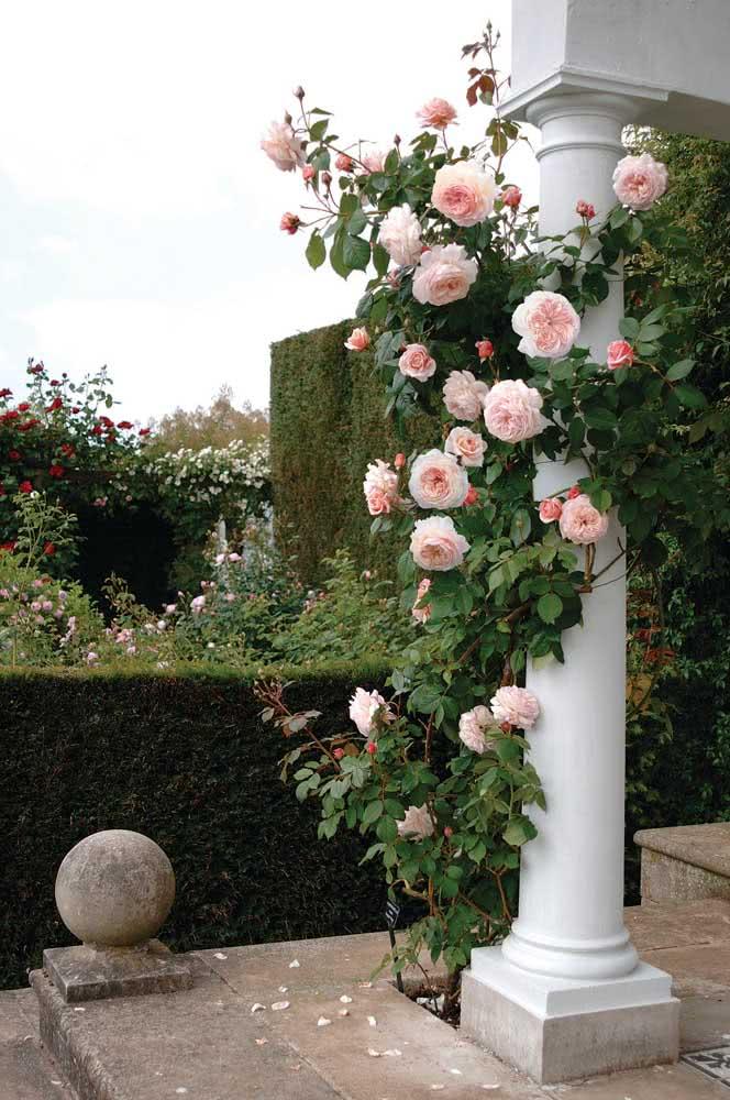 As colunas da casa também podem receber as rosas trepadeiras