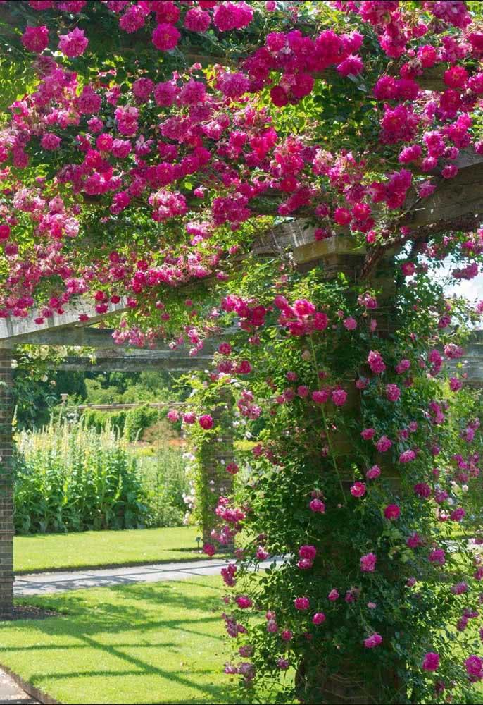 Encante-se por esse pergolado com rosa trepadeira
