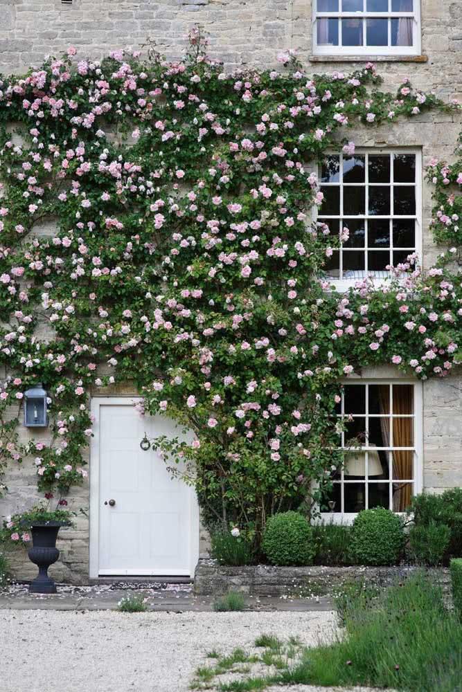 E se ela cobrir toda a fachada da casa? Maravilha!