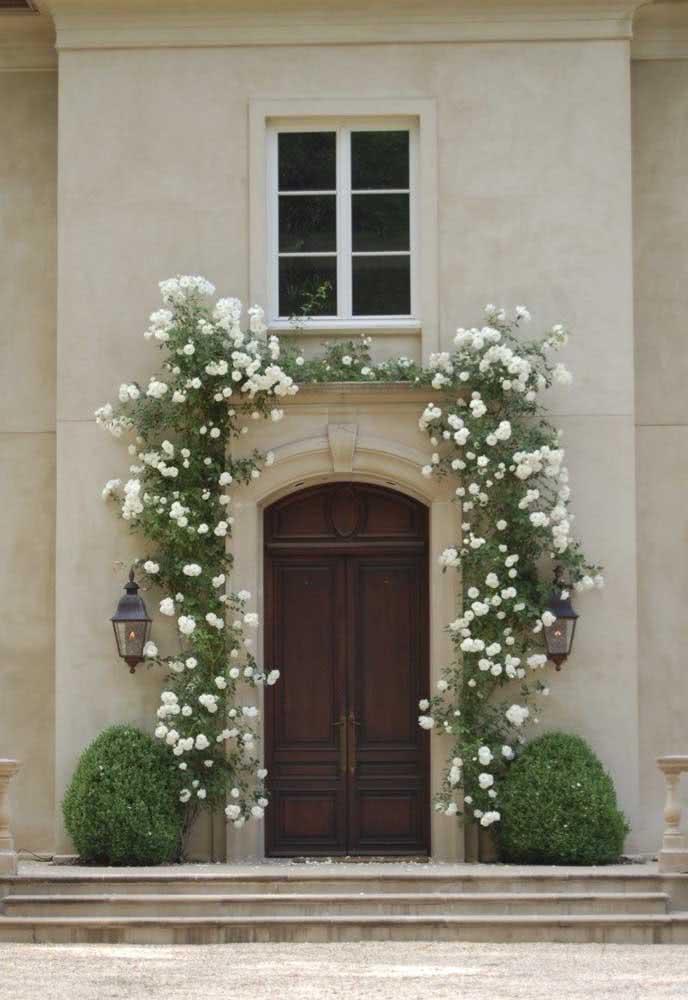 Rosa trepadeira branca para adornar a fachada da casa