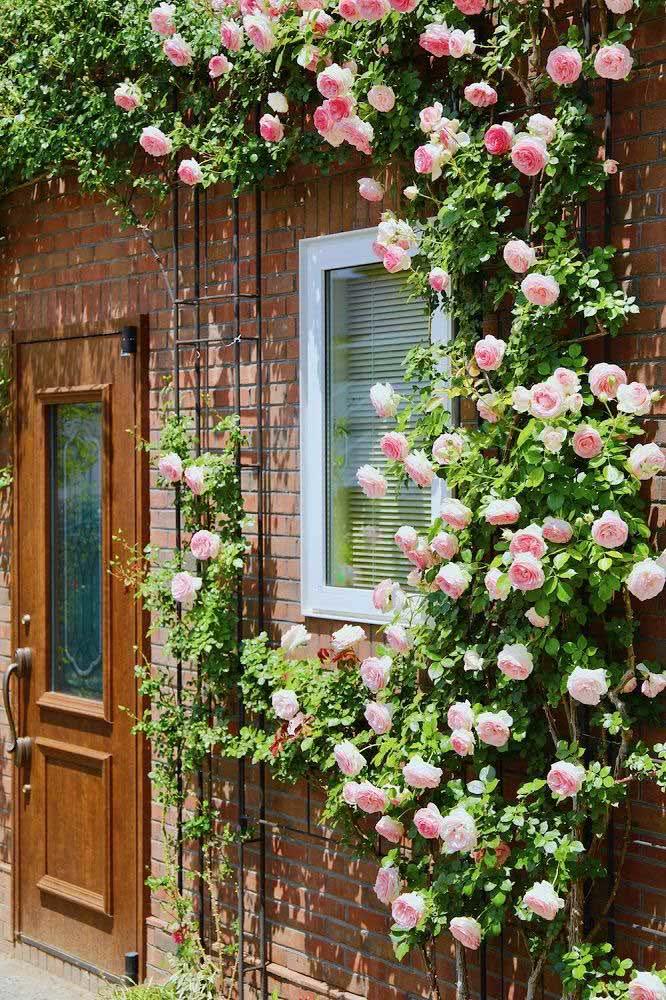 A parede de tijolinhos ficou um charme só em contraste com a delicadeza da rosa trepadeira