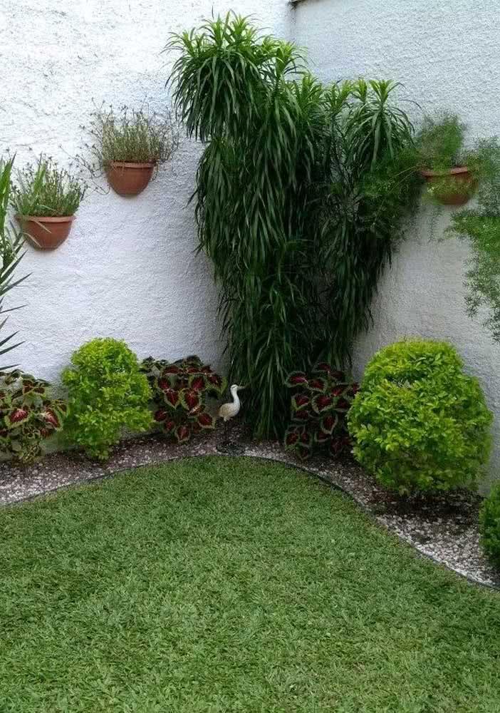 Pingo de ouro no jardim: um canteiro popular nas casas brasileiras