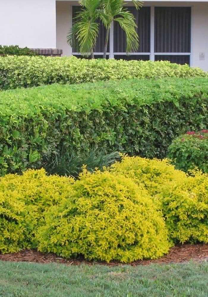 Jardim moderno com canteiro de pingo de ouro