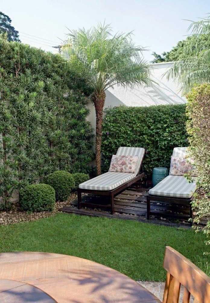 O jeito mais clássico de todos de usar a pingo de ouro: em pequenos arbustos no jardim