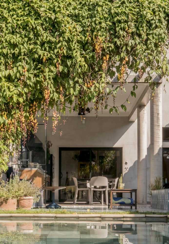 As plantas trazem refresco e vitalidade para a fachada da casa