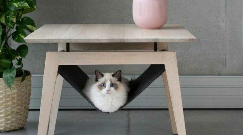 Casinha para gatos: dicas, como fazer a sua e fotos para se inspirar