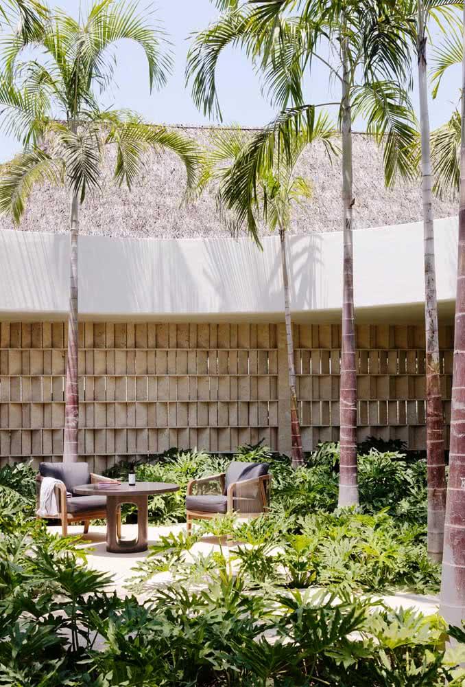 Para jardins amplos e espaçosos, nada como coqueiros grandes de jardim