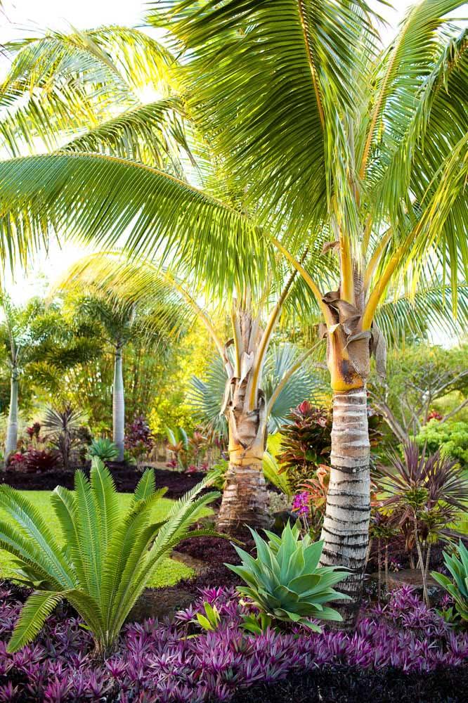Mini coqueiros de jardim para o paisagismo tropical