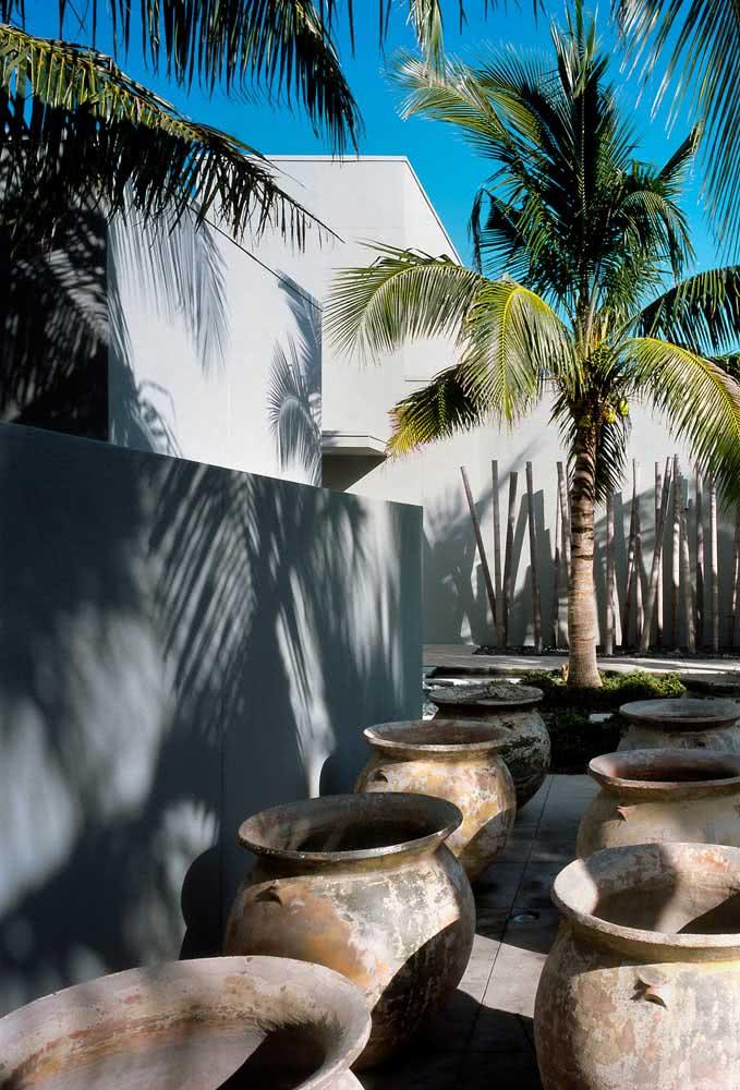 Muito sol para o coqueiro de jardim crescer