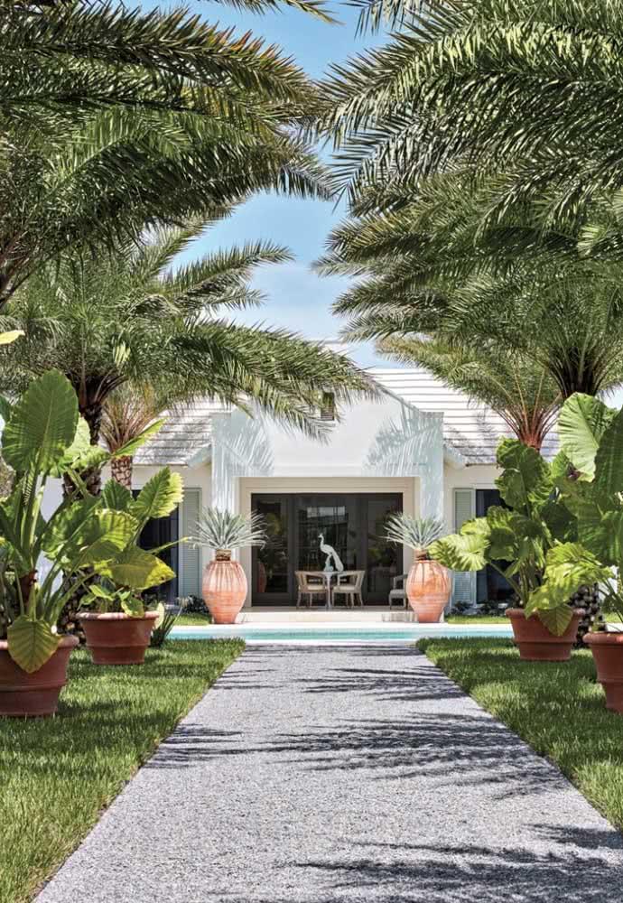 Jardim tropical com coqueiros: a planta não pode faltar