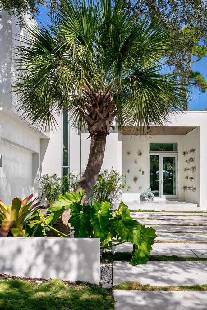 A fachada branca ajuda a destacar o verde intenso das folhas do coqueiro de jardim