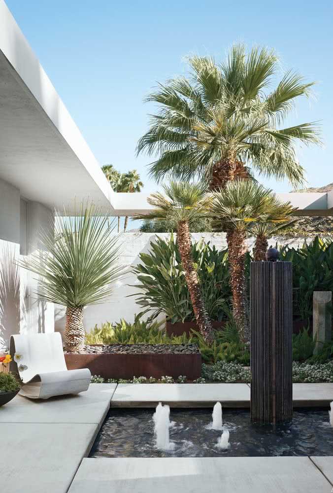 A Palmeira Leque é uma entre os vários tipos de coqueiro de jardim