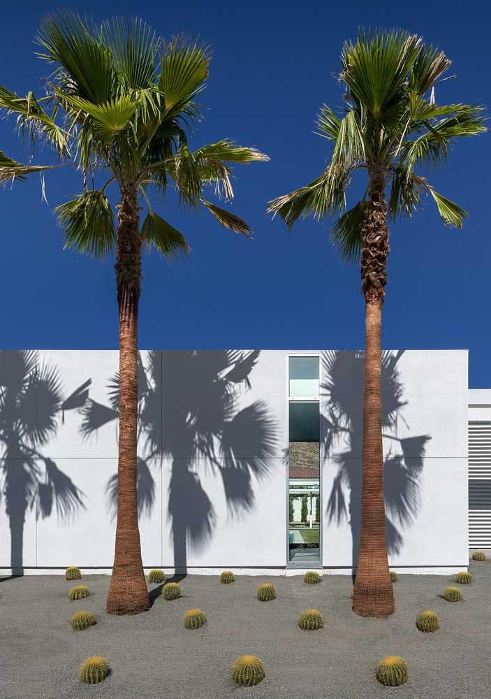 Já aqui nessa fachada, a ideia foi combinar coqueiros de jardim com cactos