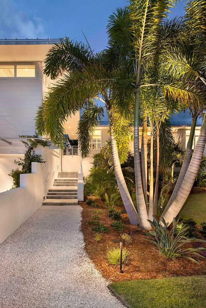 Se bater a dúvida de como cuidar de coqueiro de jardim, lembre-se de duas coisas: regas frequentes e muita luz