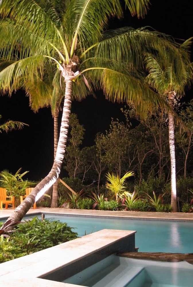Habitat natural dos coqueiros de jardim: a beira da piscina