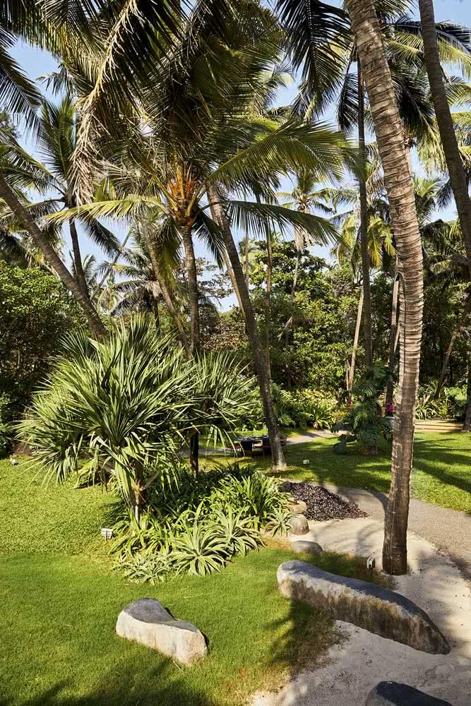 A beleza do contraste entre o mini coqueiro de jardim e o coqueiro de jardim grande