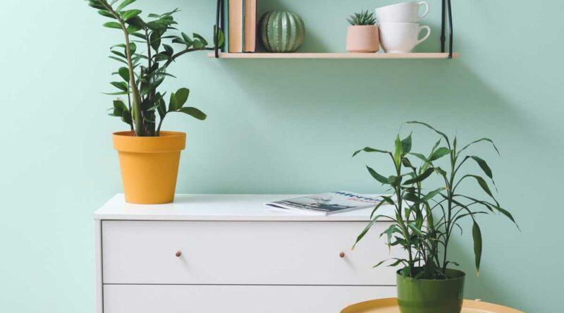Verde menta: o que é? significado, como combinar e fotos de decoração