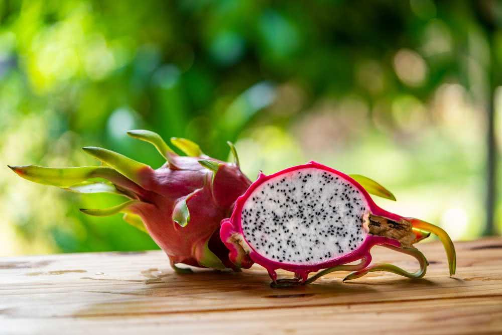 Como plantar pitaya em casa