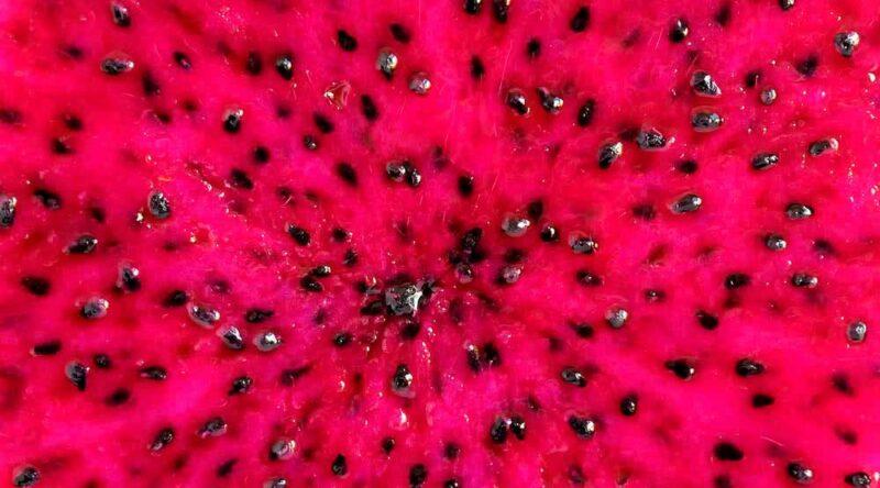 Como plantar pitaya: 4 diferentes formas para você fazer em casa