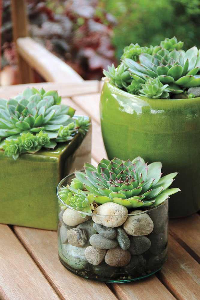 Composição com vaso de cerâmica e vaso de vidro para as suculentas