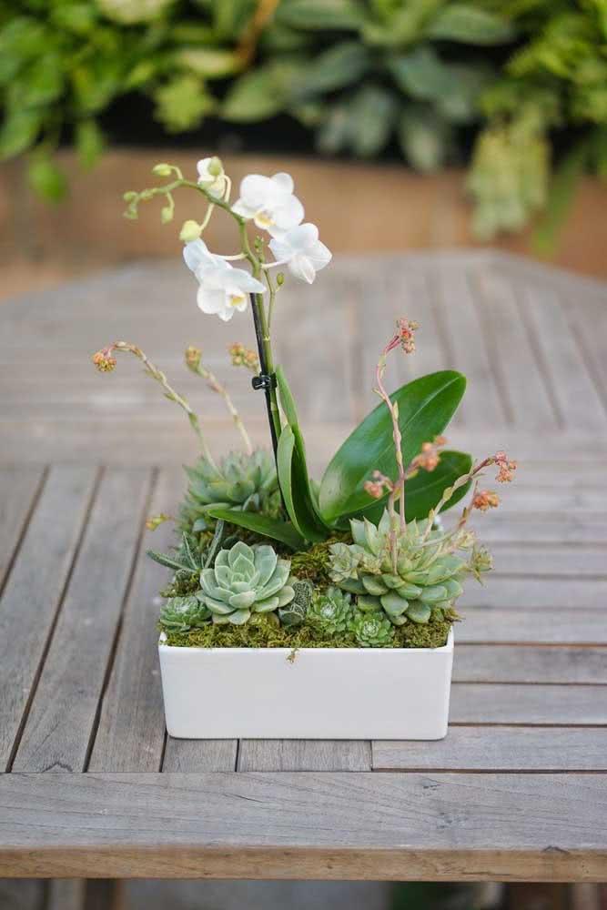 Vaso de cimento para suculentas e orquídeas