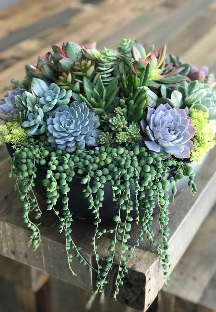 Vaso preto para suculentas: realce o tom de verde das plantas