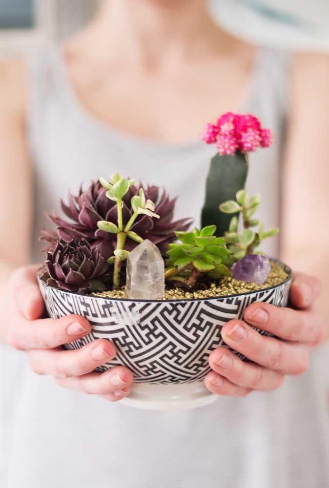 Mini jardim de suculentas no vaso de cerâmica
