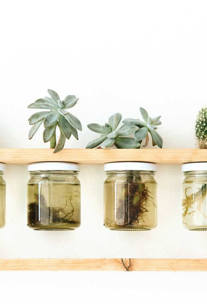 Já pensou em cultivar suculentas na água?