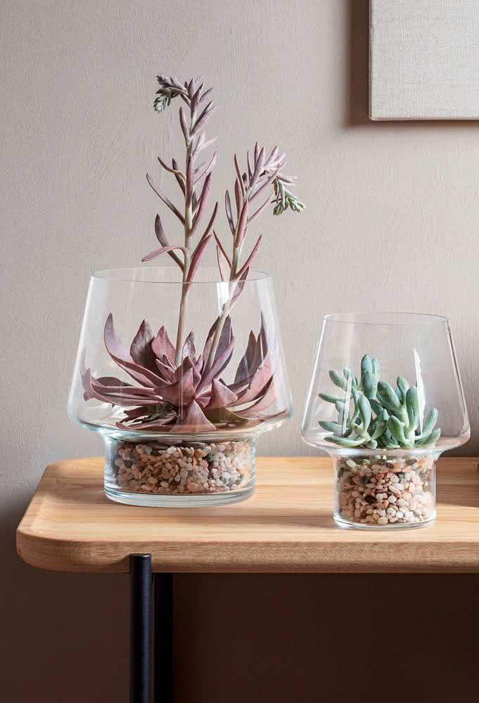 Vaso de vidro para suculentas em tamanhos diferentes para formar uma composição moderna na decoração