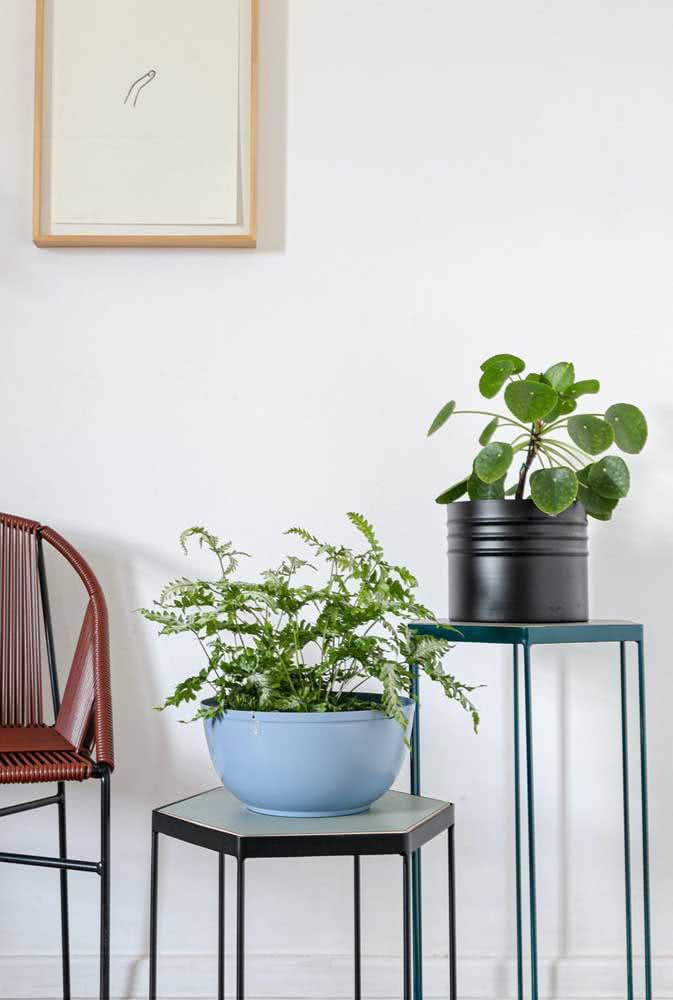 Um vaso moderno para a pilea esbanjar seus traços de planta minimalista