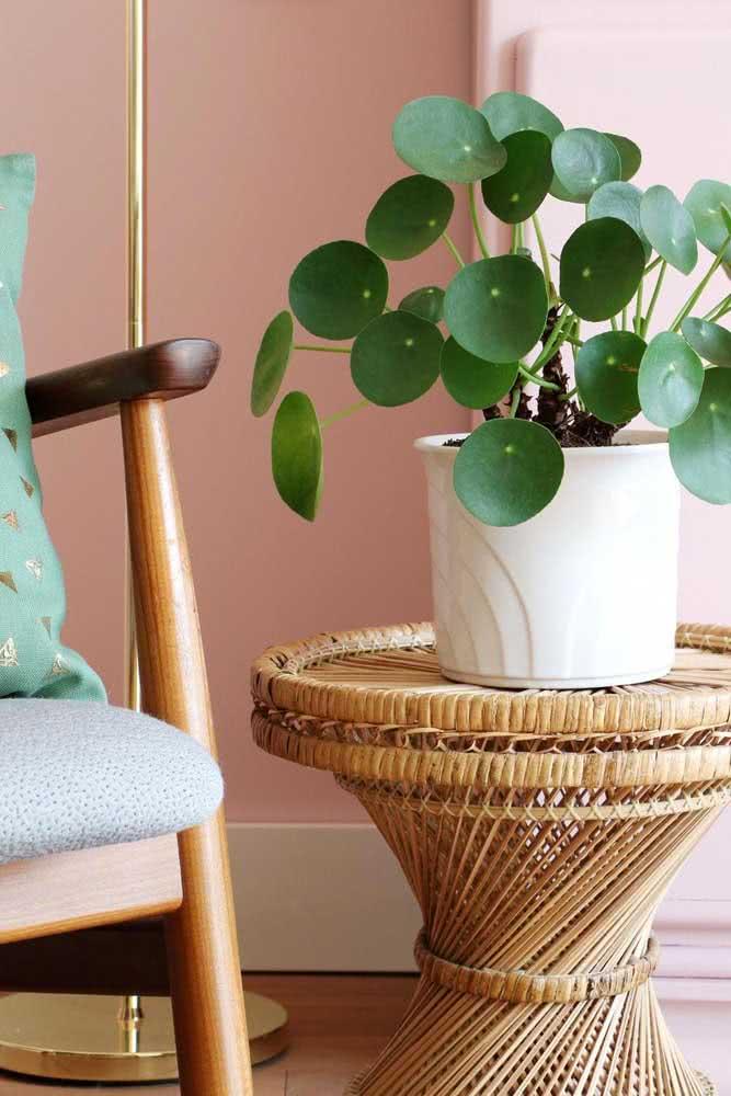 O vaso branco de cerâmica é perfeito para destacar o tom de verde das folhas da Pilea