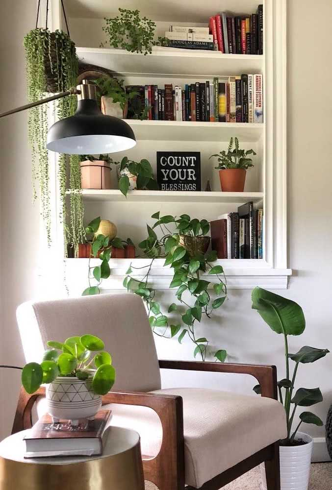 Cantinho de leitura abraçado pelas plantas, entre elas a pilea peperomioides