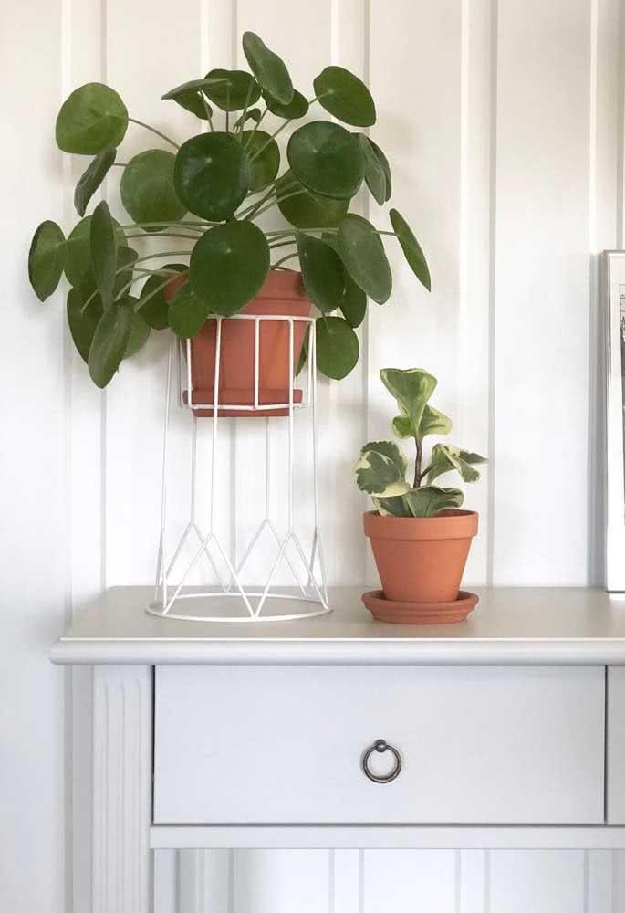 Uma composição simples, moderna e elegante com a pilea e a outra plantinha menor. Ambas no vasinho de barro