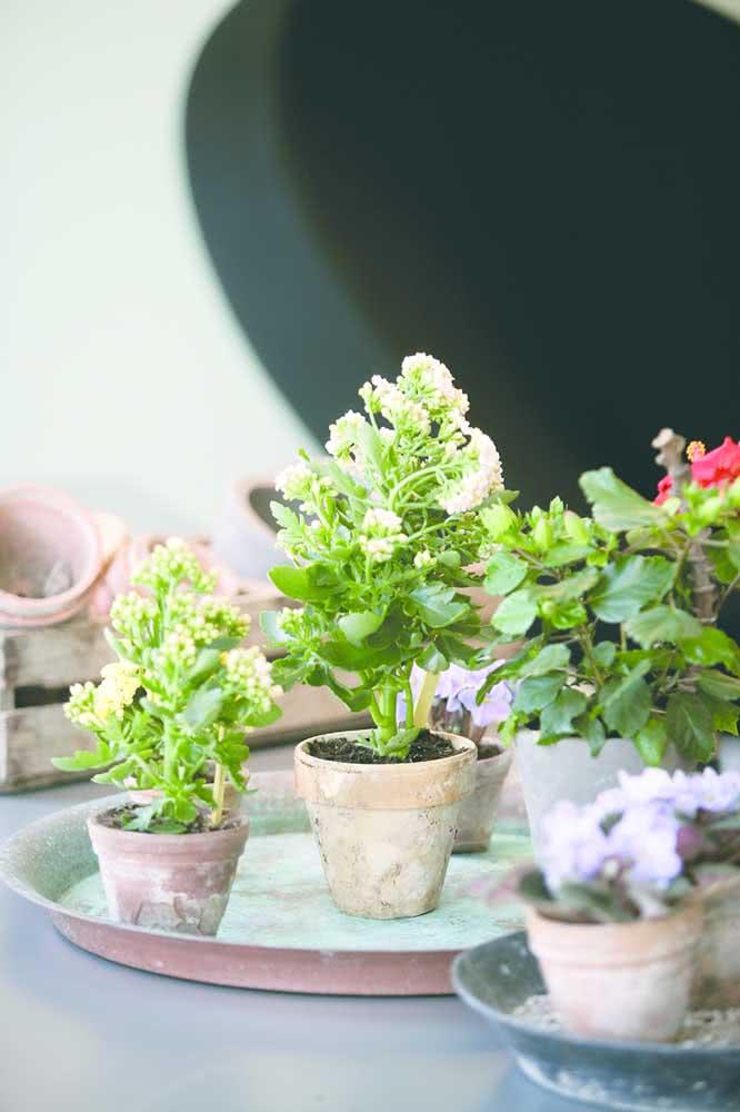 E o que acha de vasinhos de barro para plantar a flor da fortuna?
