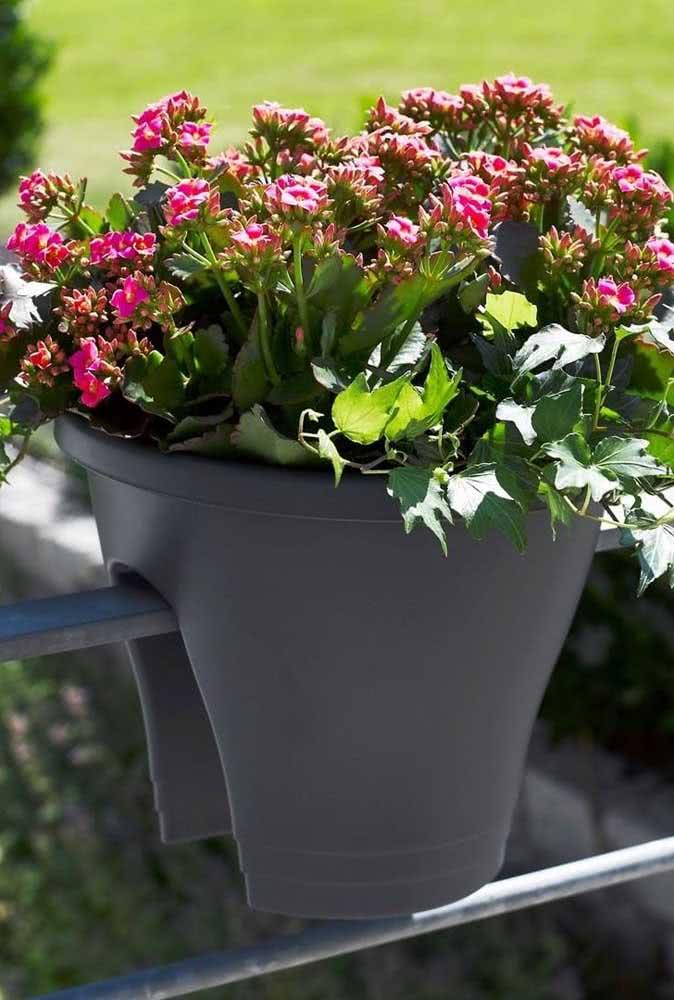Flor da fortuna para varanda em vaso adaptado
