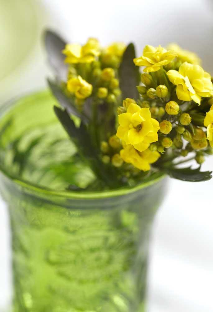 Como fazer muda da flor da fortuna amarela? Corte um galhinho e plante
