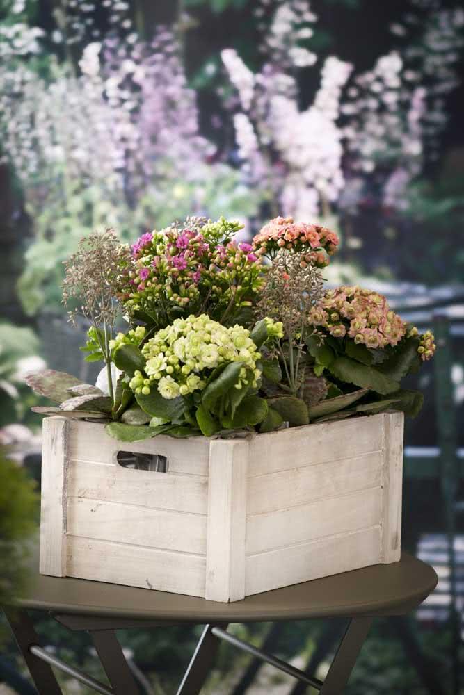 Flor da fortuna colorida em um arranjo dentro do caixote de madeira
